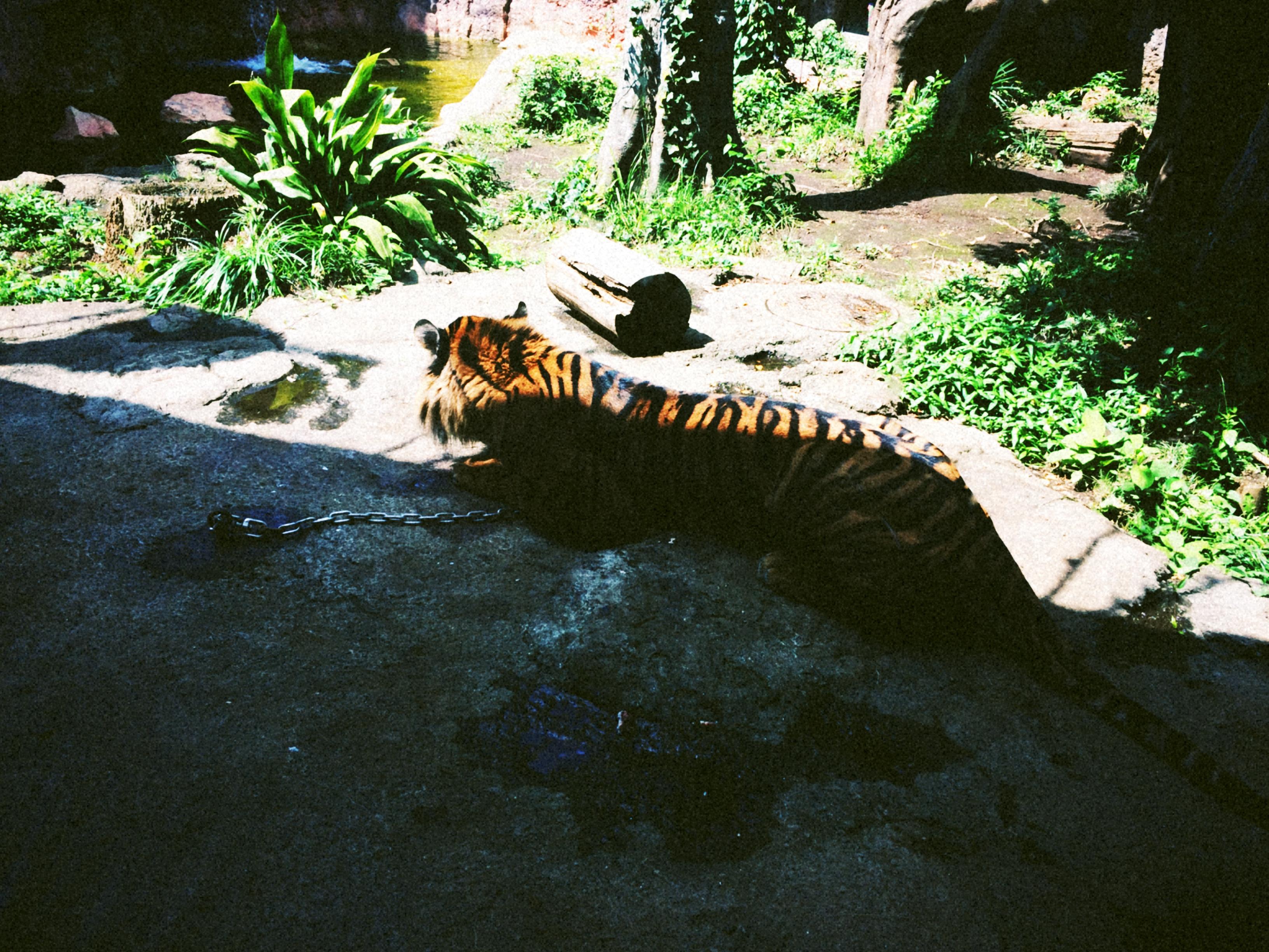 Jepang Kebun Binatang Ueno Saskyongs Blog